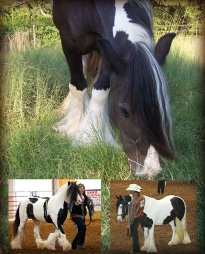 Collage of Gypsy Vanner Horses